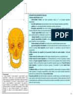 LP Normele Craniene.pdf