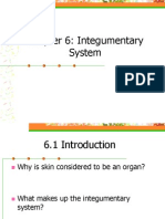 chapter 6 - integumentary