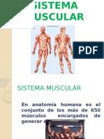 tejidomuscular1