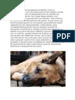 Convulciones en Perros