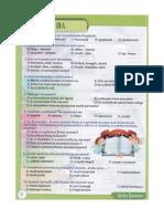 Subiecte, Smart, Limba Romană, Clasa AIIIa, Noiembrie 2013