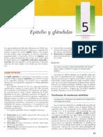 Cap 05 - Epitelio y Glándulas