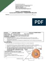 Guía de Tipos de Transprte Celular