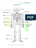 1.1 Ossos - Ficha Informativa (1)