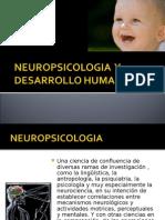 Neuro Psicologia y Des Arrollo Human o