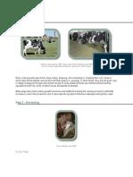 Milk Production Process