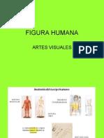 Figura Humana Proporciones 2c2bamedio