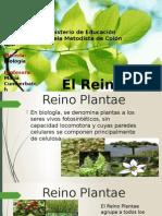 El Reino Plantae