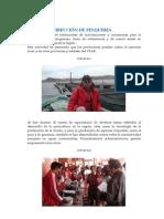 DIRECCION_PESQUERIA.pdf