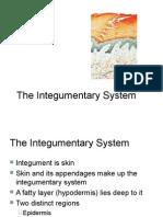 integumentary system 1