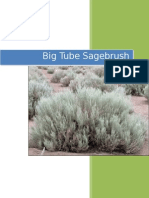 big tube sagebrush