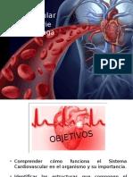 5-Sistema-Cardiovascular.pptx