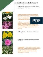 Semnificatia Florilor Care Incep Cu Litera C