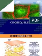 microtubulos y filamentos intermedios
