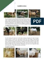 Tugas DTPP Kambing & Domba