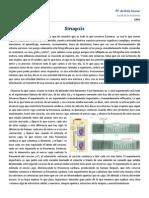 Clase 9 Sinapsis Fisio1