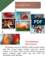 Ppt Teknik Budidaya Ikan