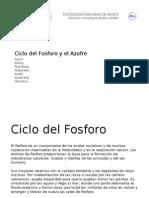 Ciclo Del Fosforo y El Azufre