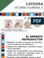 2_ Sa Aparato Reproductor