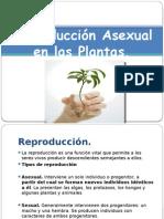 Reproducccion asexual.pptx
