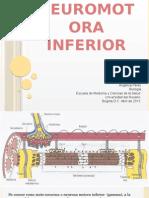 Lesión Neuromotora Inferior.pptx Presentacion.pptx Final