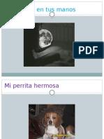 Diapositivas Luis