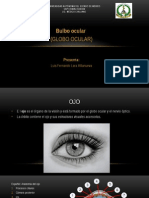 Bulbo Ocular (Globo Ocular)