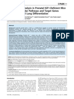 Transcriptome Analysis in Prenatal IGF1-Deficient Mice Identifies Molecular Pathways and Target Genes Involved in Distal Lung Differentiation