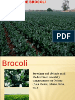 Cultivo de Brocoli.ppt