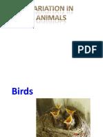 Grouping Animals Variation