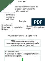 PPT Le Alghe