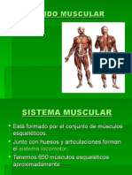 Tejido Muscular Ok