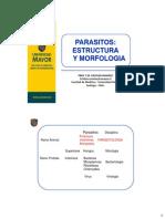 Estructura y Morfologia Parasitaria
