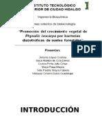 Promocion del crecimiento vegetal de Fixalis ixocarpa por bacterias diazotroficas del suelo vegetal