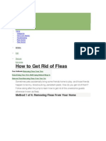 How to Get Rid of Fleasa