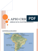 Apio Criollo