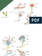 Estructuras micoticas