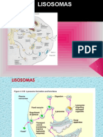 lisosomasperoxisomasglioxisomasribosomas-u-121112065917-phpapp02.ppt