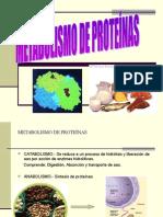 5 Metabolismo Proteinas (1)