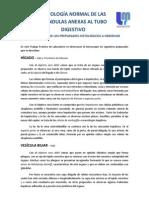Histología Normal de Anexas