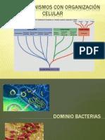 MICROBIOLOGIA AMBIENTAL.semana 2. Micororganisos Con Organizacion Celular.bacterias