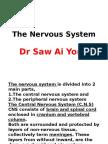 The Nervous System(BDS)