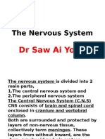 The Nervous System(BDS)