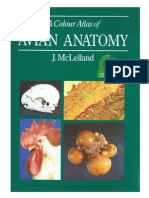 Anatomia Aviar