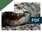 crocodilos-0000
