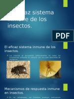 El Eficaz Sistema Inmune de Los Insectos