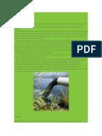 Causas y Consecuencias Del Deterioro Ambiental