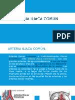 AORTA-12