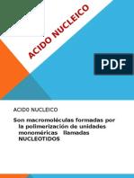ACIDO NUCLEICO