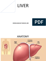 Liver anatomy and physiology medicine